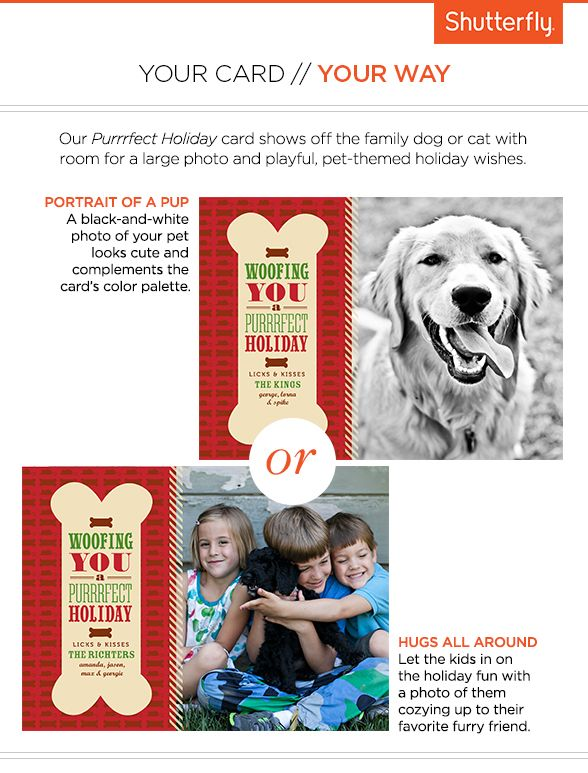 Purrrfect Holiday Cards Show Off The Family Dog Or Cat With Room For