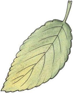 Hojas de arbol para imprimir imagenes y dibujos para for Arboles de hoja perenne para madrid