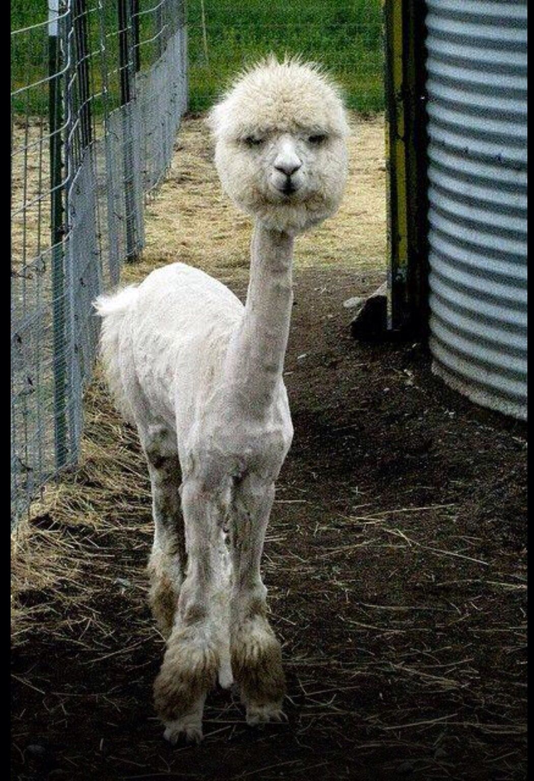 One funny looking animal! Funny animals, Cute animals