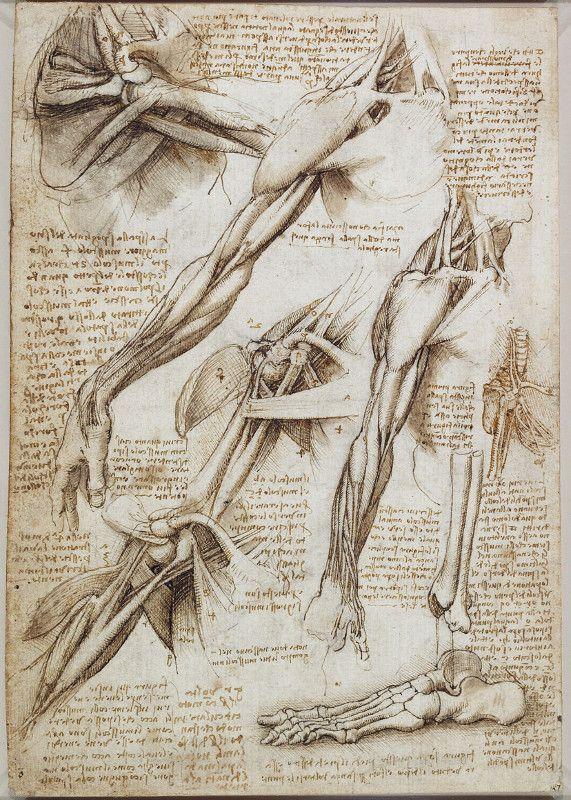 Resultado De Imagen De Laminas Anatomia Antiguas Leonardo Da Vinci Arte De Anatomia Humana Arte De Anatomia Dibujo Anatomia Humana