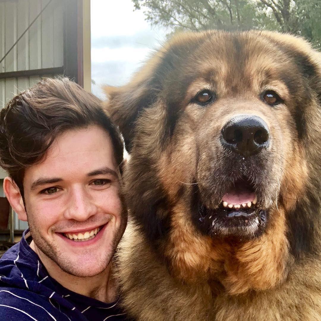 Boy and bear dog gifts tibetan mastiff dogs