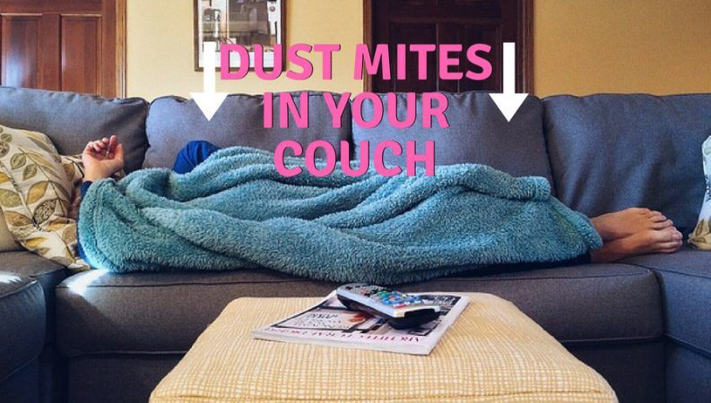 How To Get Rid Of Dust Mites In A Couch (Dust Free Couch