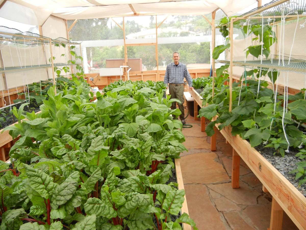 What You Can Grow in a Portable Farm Aquaponics system