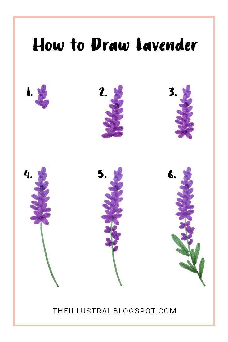 Wie Man Lavendel In 6 Einfachen Schritten Zeichnet Lavender Flower