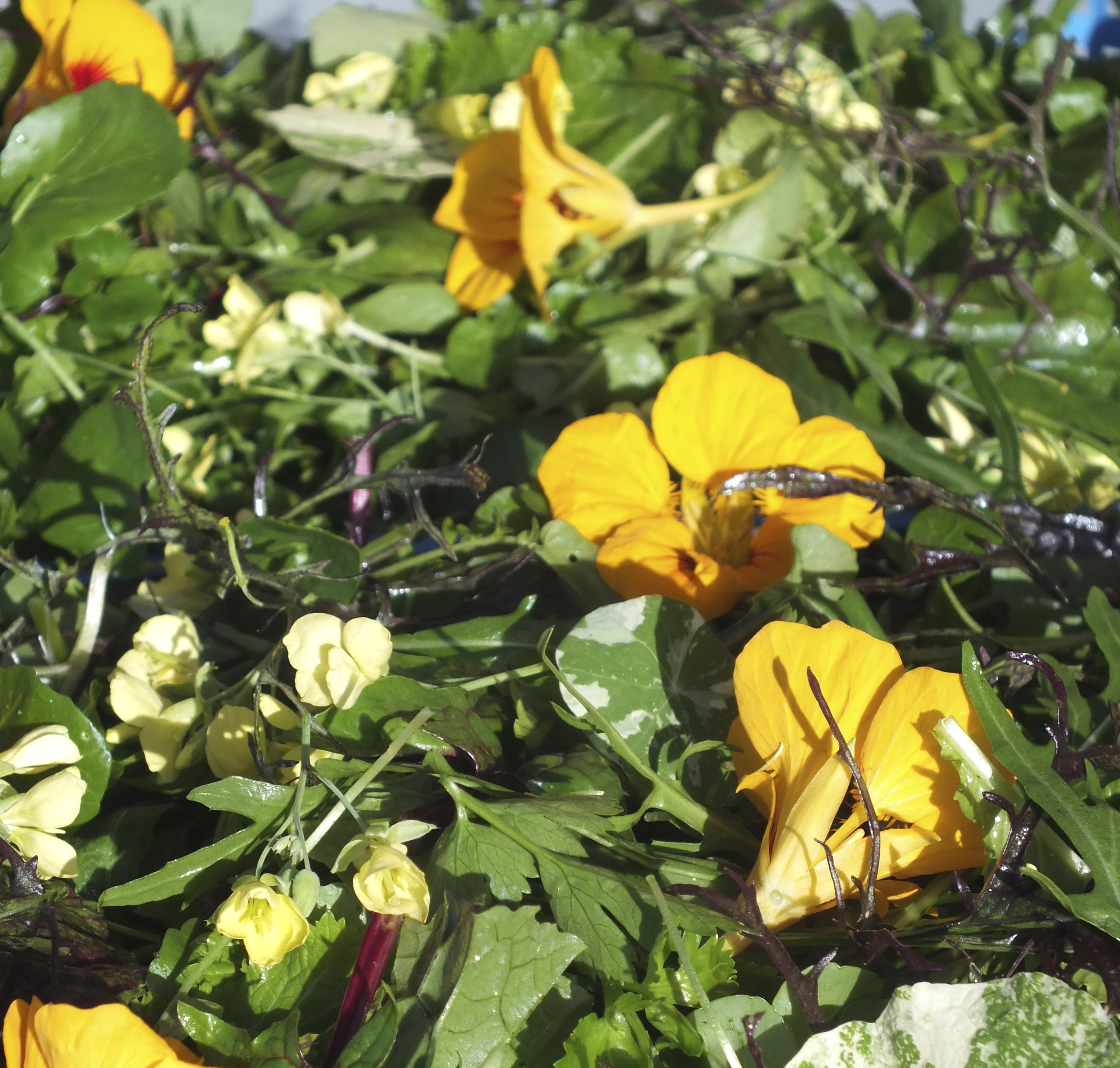 Wild Rocket Flowers With Nasturtiums In A Spicy Salad From Maddocks