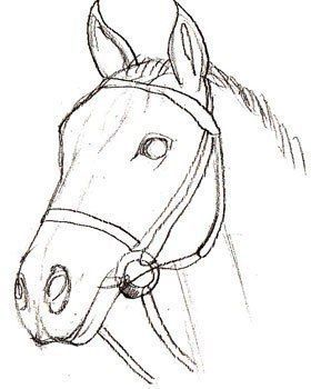 hier erkennen sie selber wie kann man ein pferd realistisch zeichnen schritt f r schritt. Black Bedroom Furniture Sets. Home Design Ideas