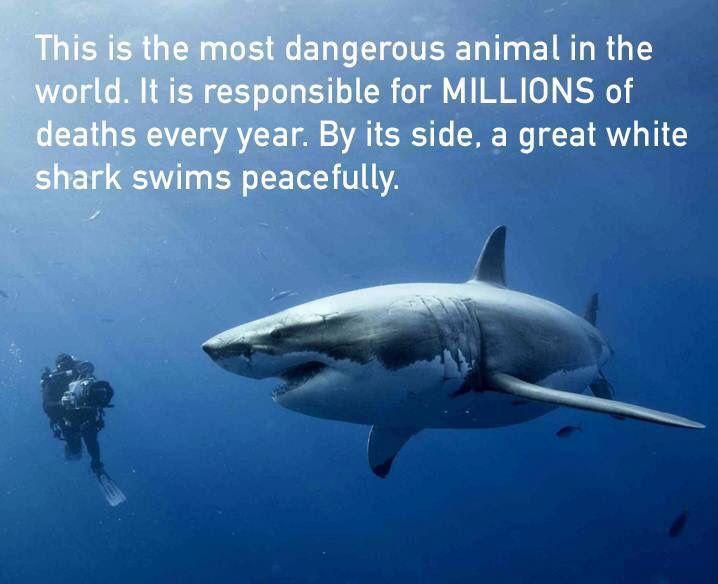 Most Dangerous Animal In The World. Shark Vs Human