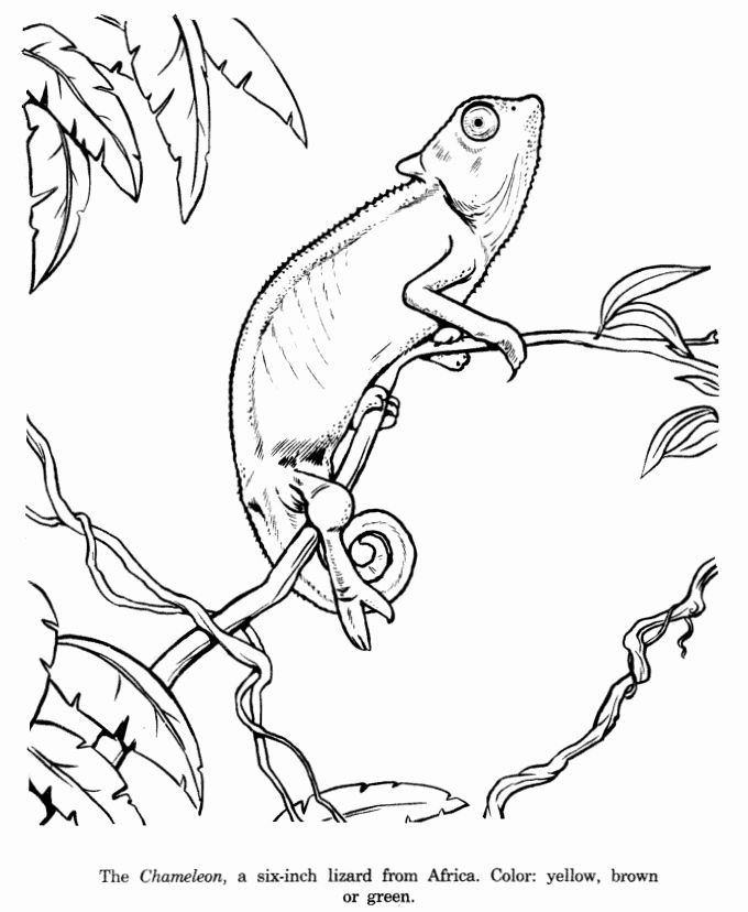 Realistic Animals Coloring Pages in 2020 | Animal line ...