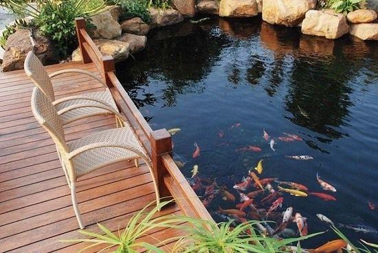 Gartenteich Selber Machen 7 Schritten Holzdeck Fische