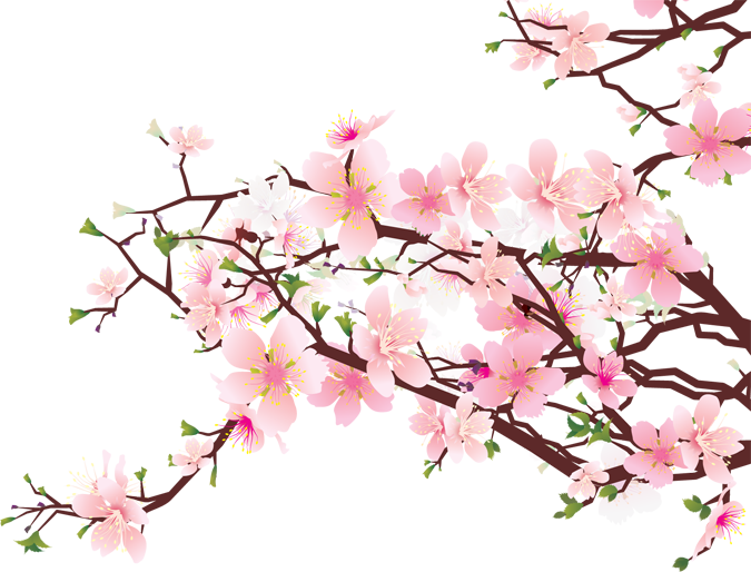 Cherry Blossoms Png 675 514 Cherry Blossom Art Cherry Blossom Wall Art Cherry Blossom Clip Art