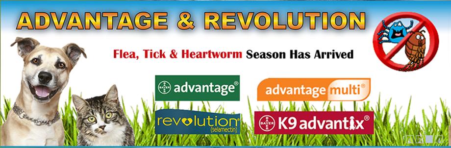 Flea, Heart Worm and Tick Medication Revolution flea