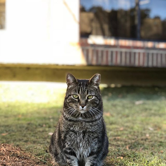 The St Mary S Law Cat Sure Is Photogenic Huh Catsofinstagram