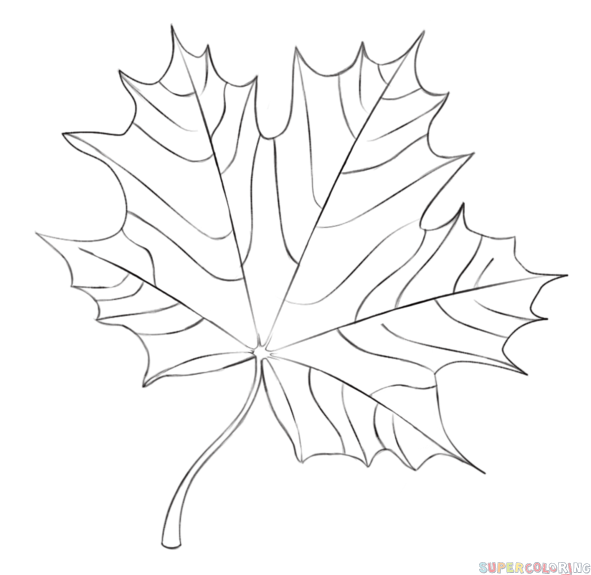 How To Draw A Maple Leaf Step By Step Drawing Tutorials Dessin Feuille Feuille D érable Dessin Arbre