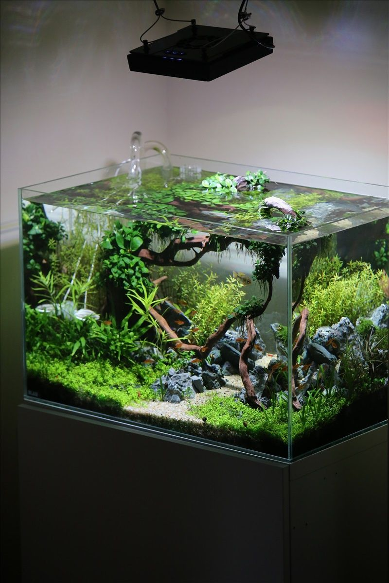 Planted Tank Coisia Vallem by Lauris Karpovs Aquascape Awards