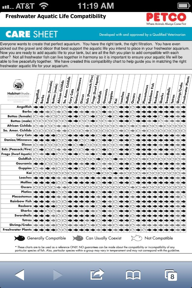 Freshwater Water Fish Compatibility Chart  Fishtank Preparation