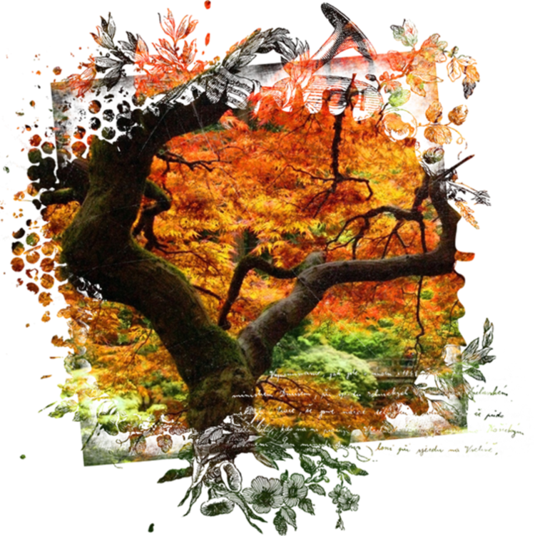 Autumn Backgrounds #1 (09).png - Download at 4shared