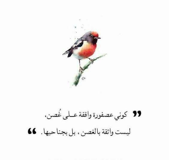 Desertrose بل واثقه بجناحها Positive Vibes Quotes Vibe Quote Arabic Quotes