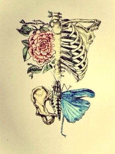 Rib Cage Drawing With Flowers : drawing, flowers, Skeleton, Tattoos,, Tattoo,, Anatomy