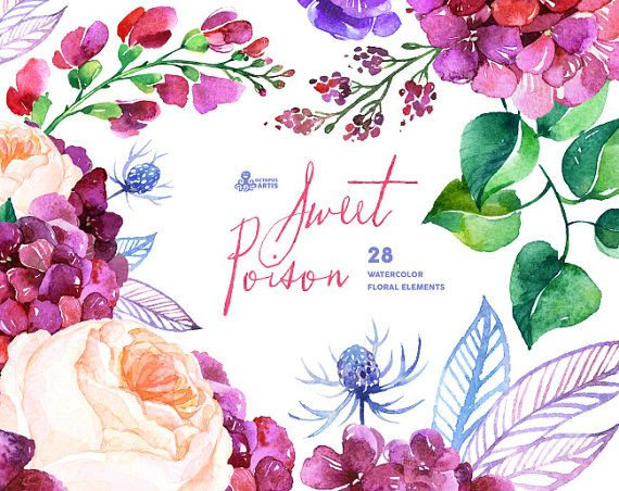 Sweet Poison: 28 Watercolor Elements, hydrangea, roses ...
