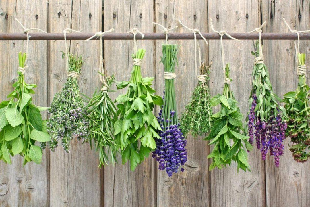 Como Secar Hierbas Aromáticas Y Medicinales Para Almacenar Hierbas Secado De Hierbas Hierbas Aromáticas