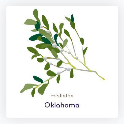 Oklahoma State Flower Mistletoe Art Design Oklahoma Plant