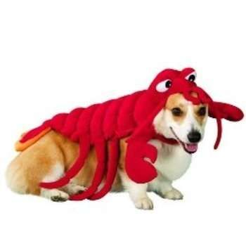Crustacean Canine Wear Pet Costumes Dog Costumes Dogs