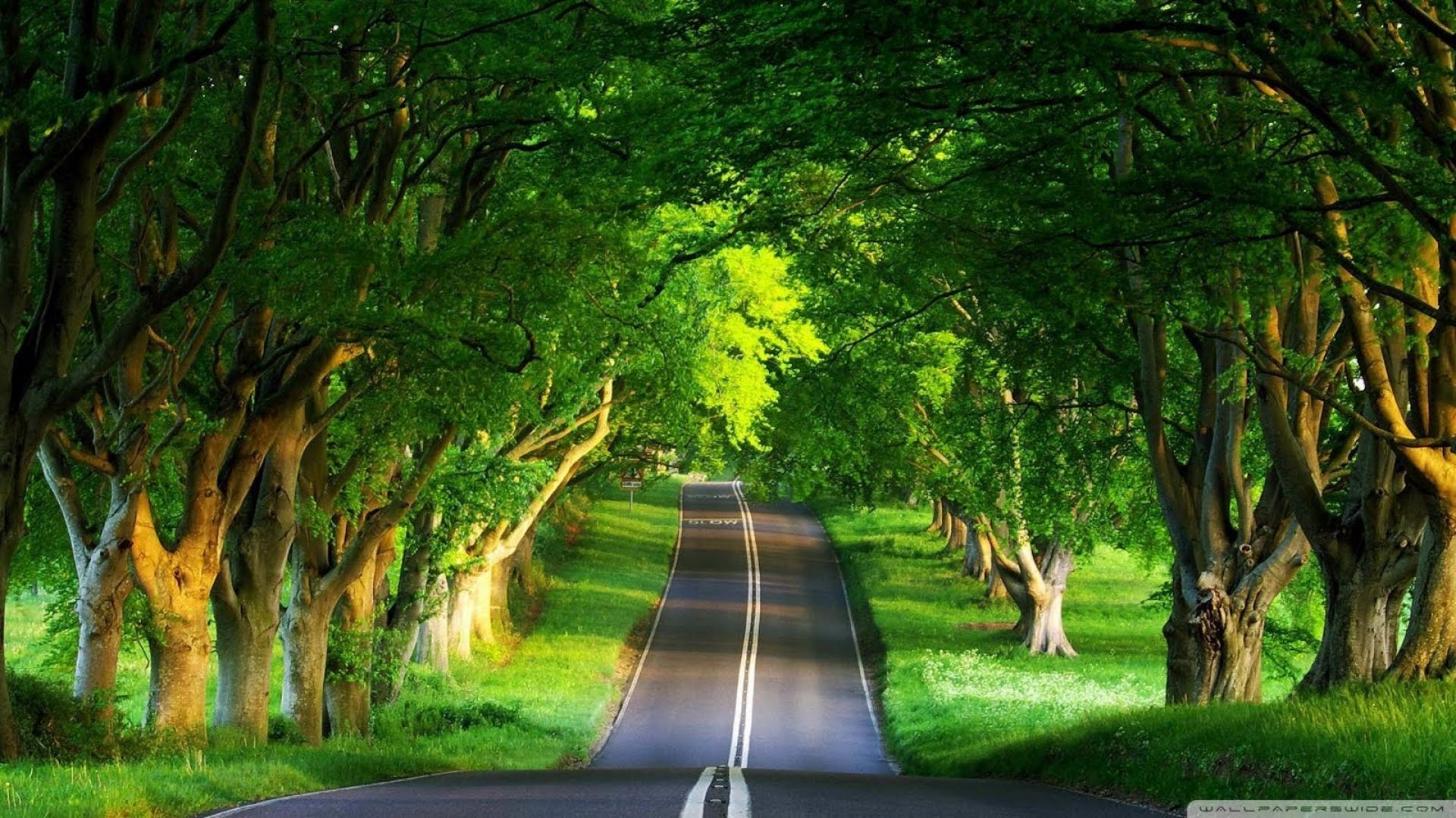 Awesome Tree And Road Wallpaper Green Nature Wallpaper Best Nature Wallpapers Nature Desktop Wallpaper