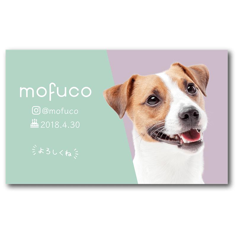シンプルで見やすく スッキリおしゃれな背景色の犬のペット名刺です 名刺 名刺 デザイン デザイン