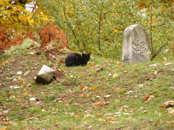5 Disturbing Cemeteries In New York That Will Give You Goosebumps Scary Ghost Stories Scary Places New York