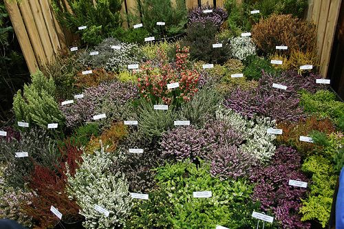 Pacific Northwest Garden | Pacific Northwest   GardenPuzzle   Online Garden  Planning Tool | Yard | Pinterest | Gardens, Front Yards And Plants