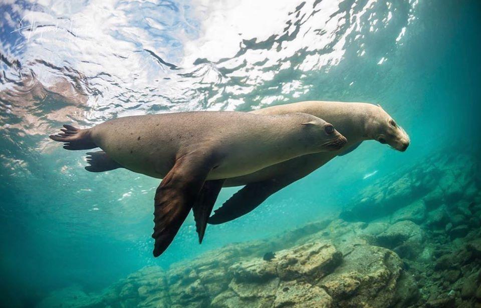 Lobos marinos en la isla Espíritu Santo en 2020 | Animales, Islas ...