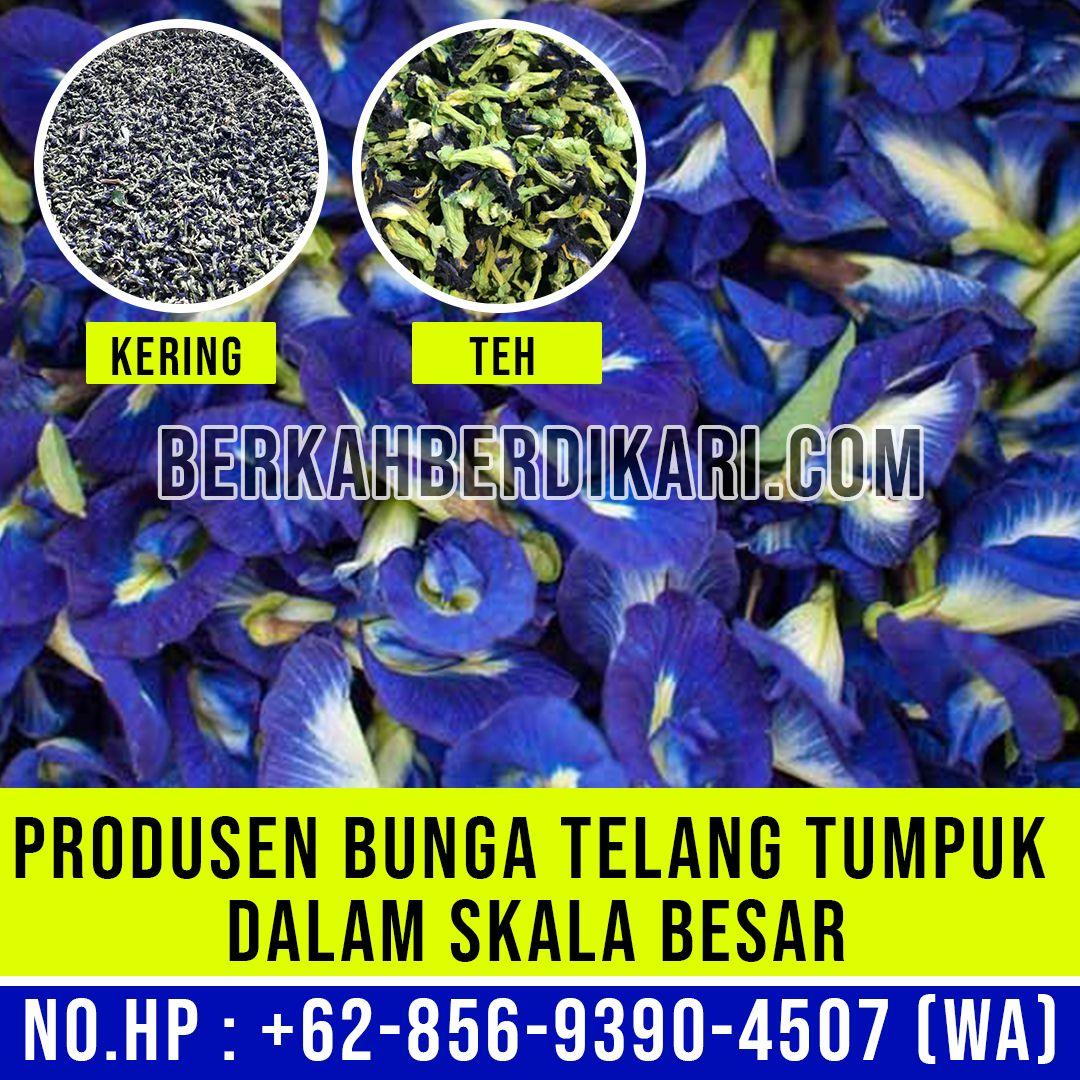 Jual Bunga Telang Kering Skala Besar Produsen Bunga Telang Segar 62 856 9390 4507 Wa Pea Flower Butterfly Pea Flower Butterfly Pea