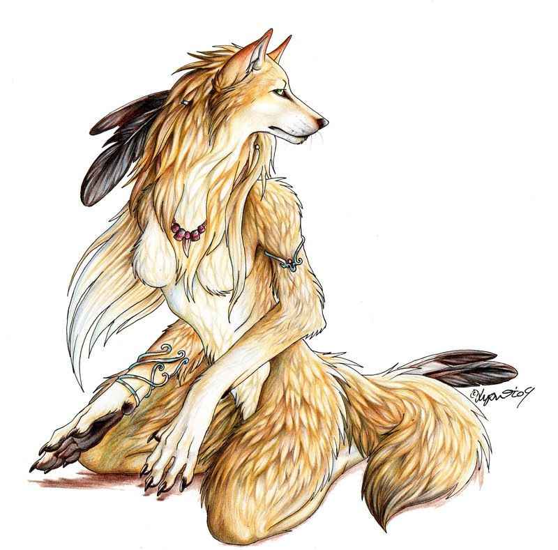 Gold Wolf With Images Furry Art Furry Drawing Werewolf Art