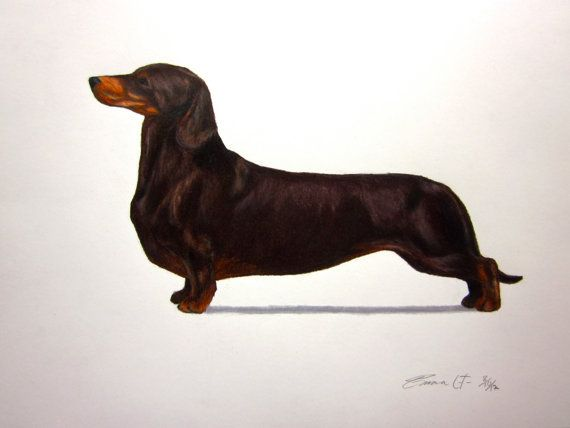 Dachshund Dog Smooth Haired Standard Archival By Emmasbestinshow