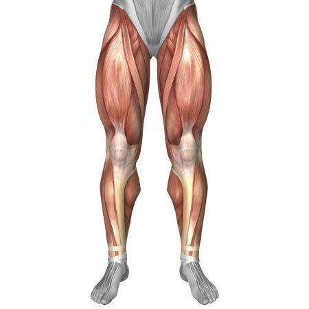 Diagram Illustrating Muscle Groups On Front Of Human Legs Canvas Art