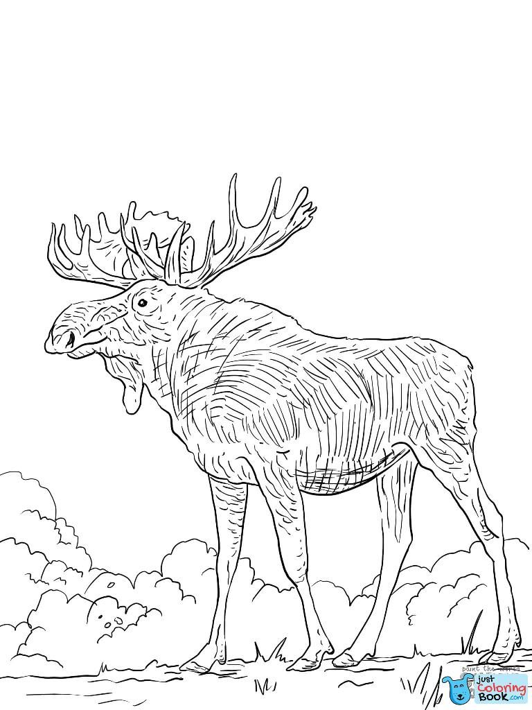 Pin Pa Deer Coloring Pages