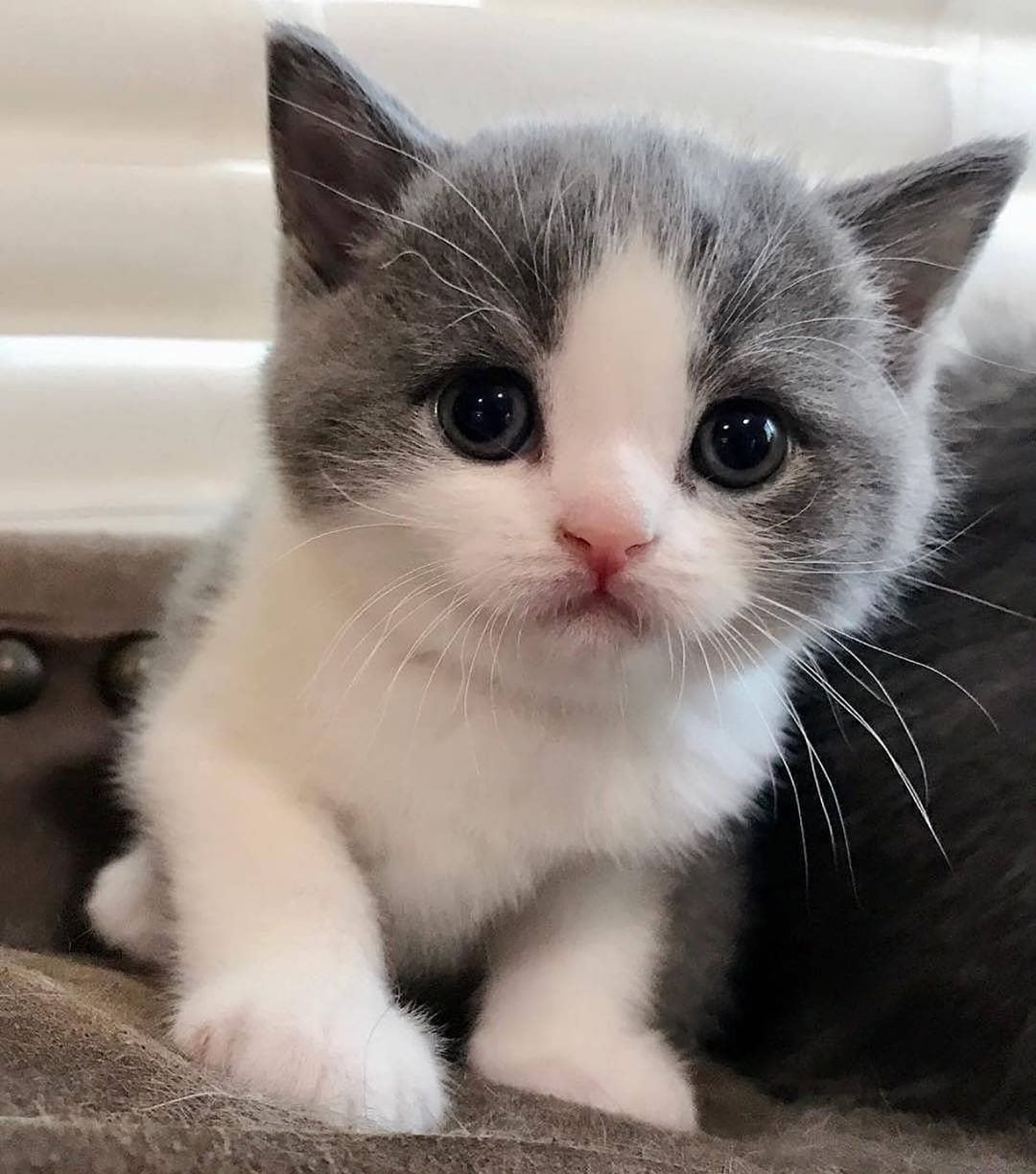 The Best Cats Say Ever Sorry I Am Late My Cat Was Sitting On Me Cute Baby Cats Baby Cats Kittens Cutest