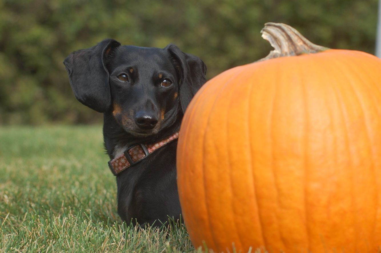 Fall photo ideas for pets