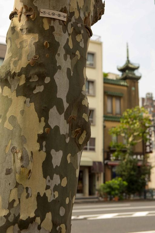 The Camouflage Tree near Kappabashi (Tokyo, Japan)|かっぱ橋付近