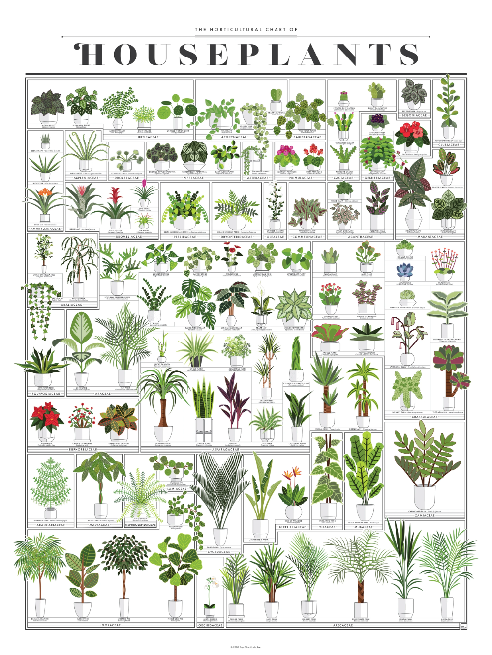 The Horticultural Chart of Houseplants
