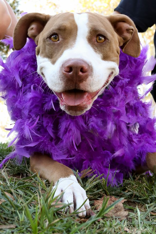 Marlowe Wheaton And Her Feather Boa Purple Pride Dogs Pets