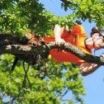 Arborists and tree surgeons :)