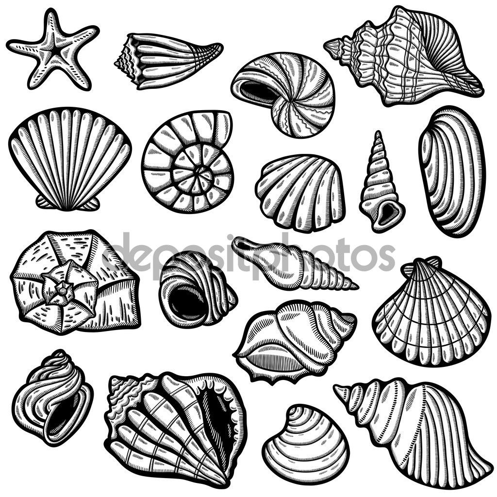 Image result for sea shell line drawing block printing image result for sea shell line drawing biocorpaavc Choice Image