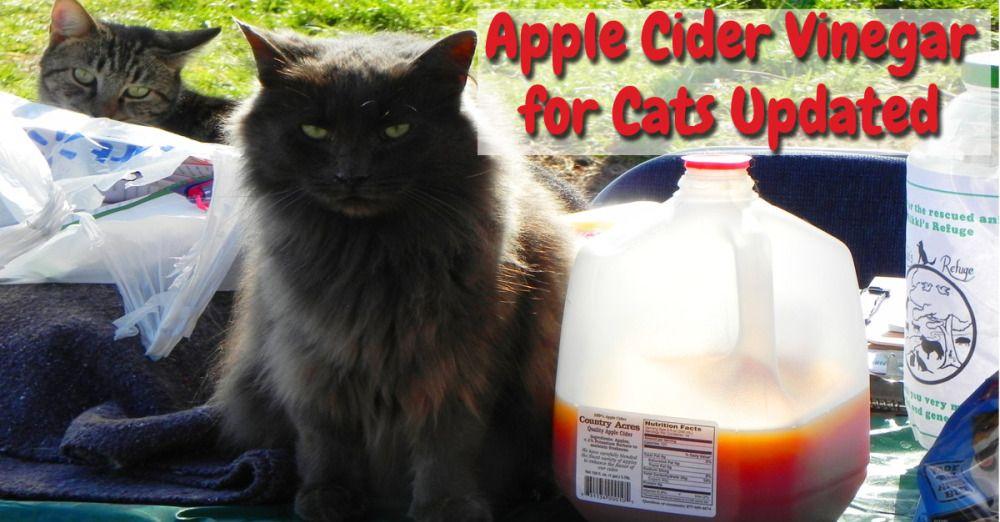 Apple cider vinegar for cats updated apple cider vinegar
