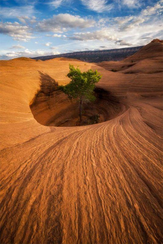 Die Natur ist so stark: 17 Bäume, die einfach nicht sterben wollen. #desertlife