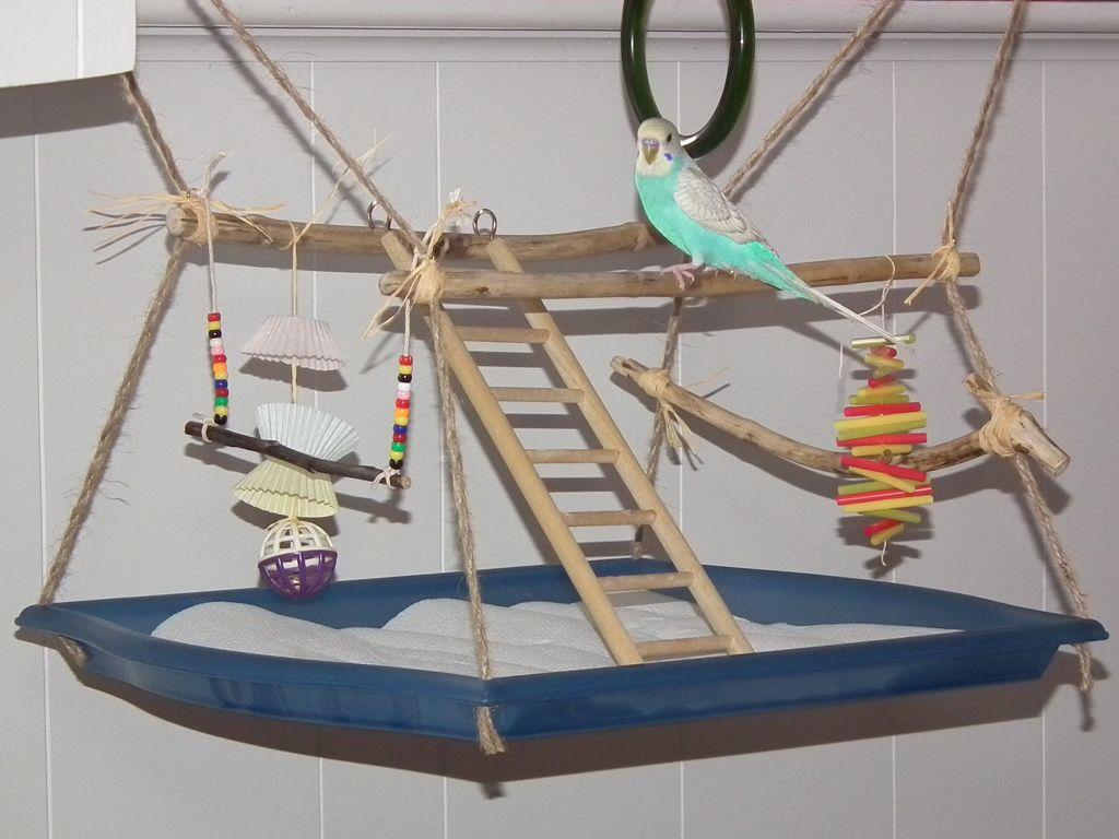 notre aire de jeux suspendue pour perruche vie deux trop classe pinterest aires de. Black Bedroom Furniture Sets. Home Design Ideas