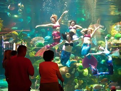 MERMAID SHOW AQUARIUM AT SILVERTON Escape from the ordinary and catch live mermaids in action in Las Vegas at the Silverton Casino Hotels aquarium.