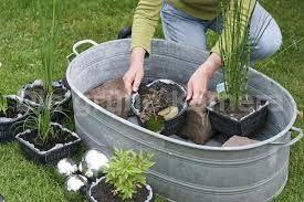 souvisej c obr zek pond pinterest plants garden und pond plants. Black Bedroom Furniture Sets. Home Design Ideas