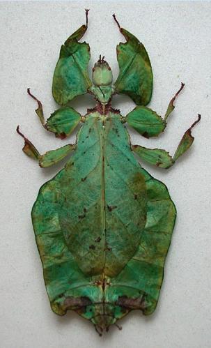 Entomology specimen | Deyrolle, Paris