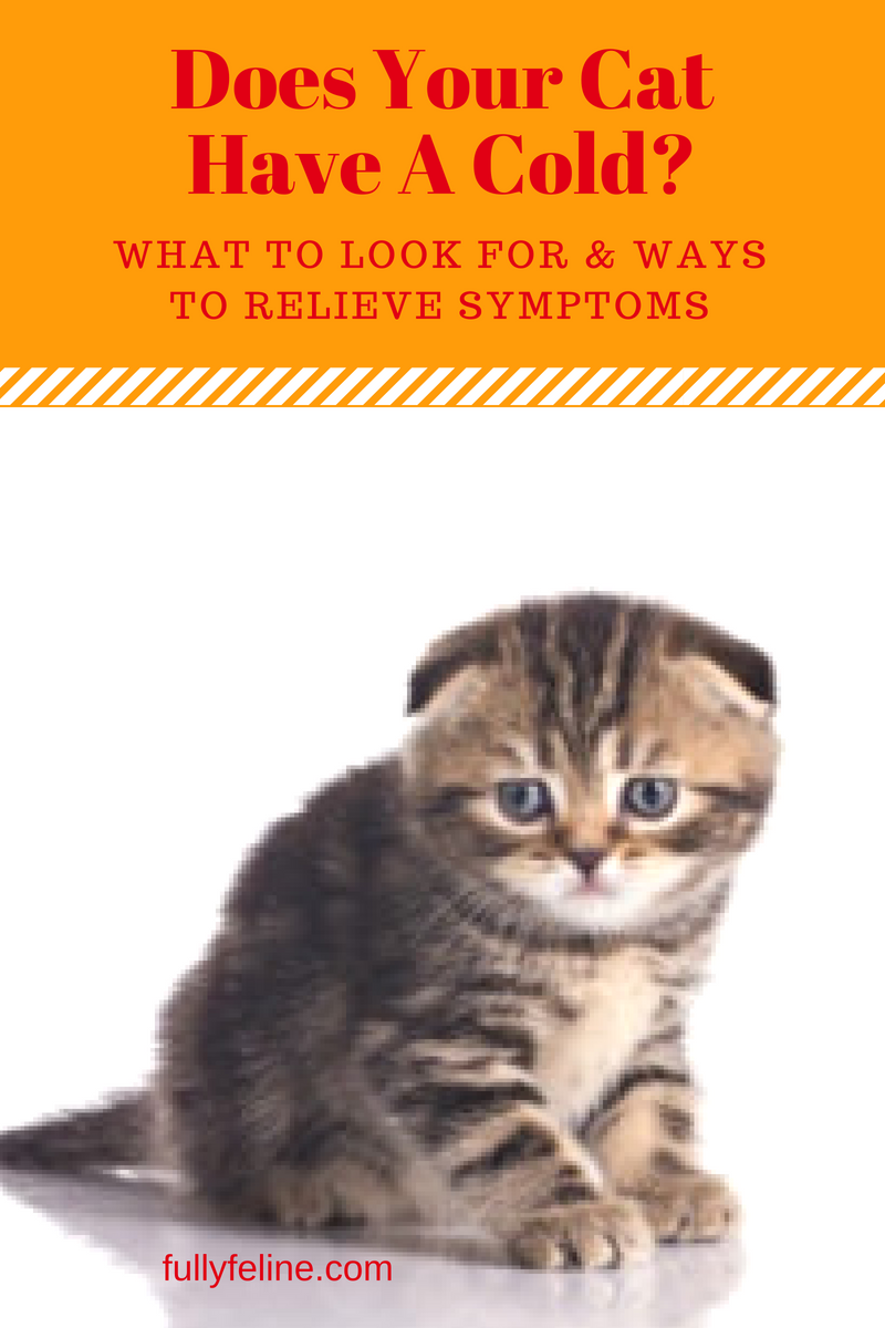 Cat Colds What Symptoms To Look For Cat cold, Cat